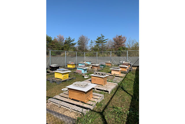 ミツバチプロジェクト